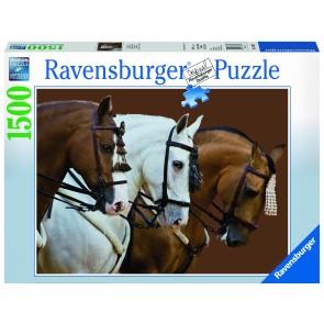 Rburg - Elegant Horses 1500pc Puzzle